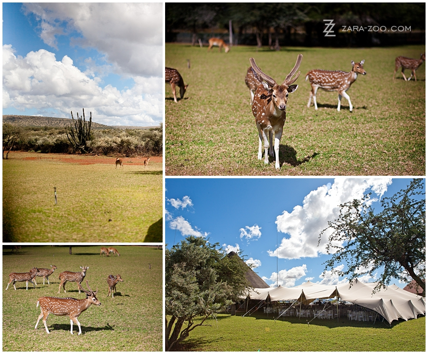Wildlife Wedding in Kuruman