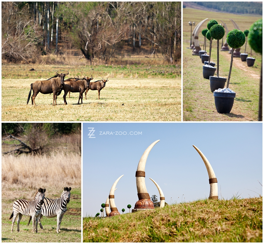 Durban Wildlife South Africa
