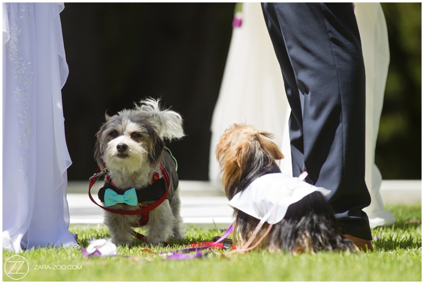 Cute Pics of Dogs at a Wedding