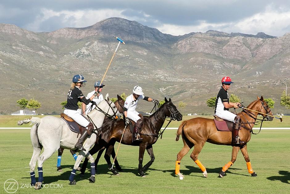 Polo Horses at Val de Vie